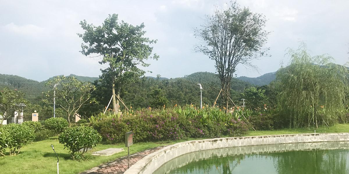 云勇生态公园园林绿化养护服务项目案例