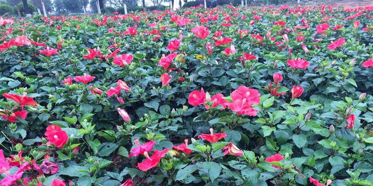 南蓬山西坡公园绿化美化工程案例