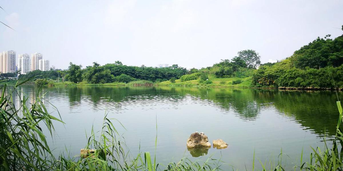 南宁相思湖公园物业绿化服务采购项目案例